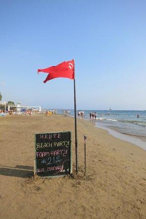 Trendy Palm Beach: beach