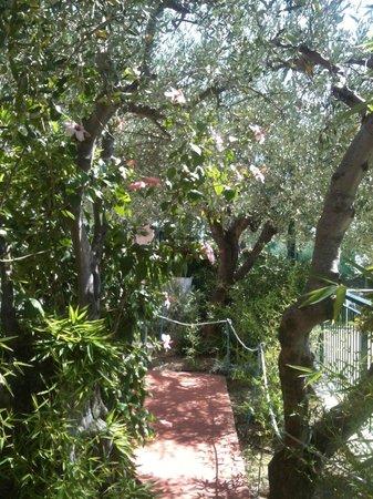 Villa Giada Resort: En jättefin trädgård med olivträd, fikon m.m.