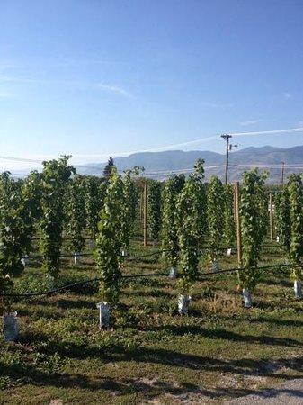 Upper Bench Estate Winery: beautiful