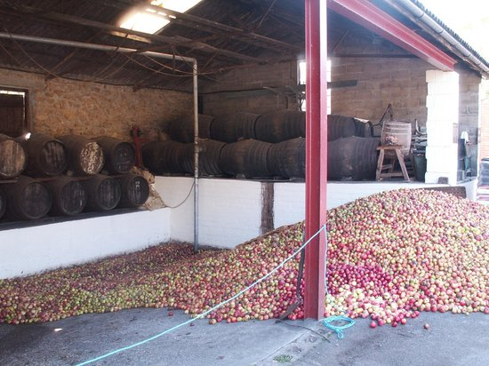 Perry's Cider Brewery and Museum: Local apples ready to be made into cider