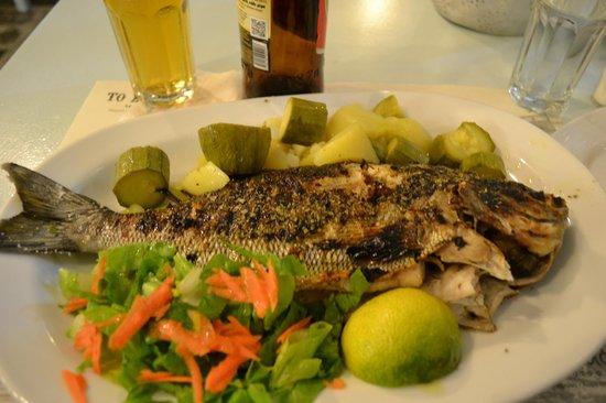 Smyrneiko : Best Fish Ever (Beatle Fish)