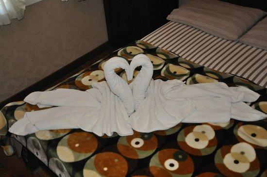 Hotel Bella: Swans
