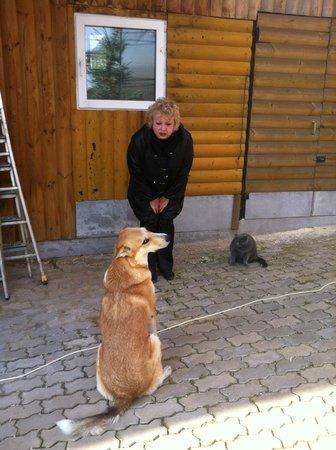 Happy Horse: хозяйский пес