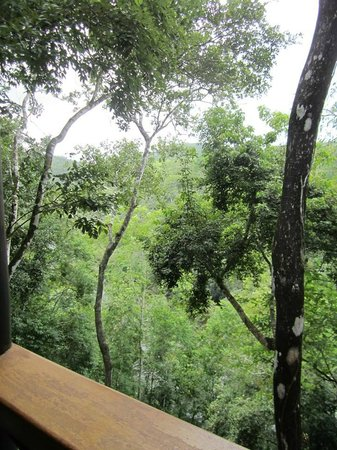 Table Rock Jungle Lodge: The view from the River View Cabana - Laughing Falcon.