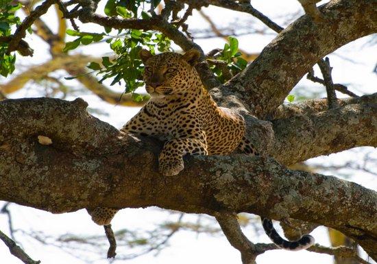 ANDA African Adventure