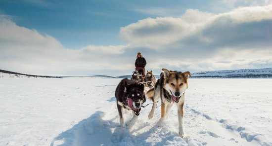 Holmen Husky - Dog Sledding Tours