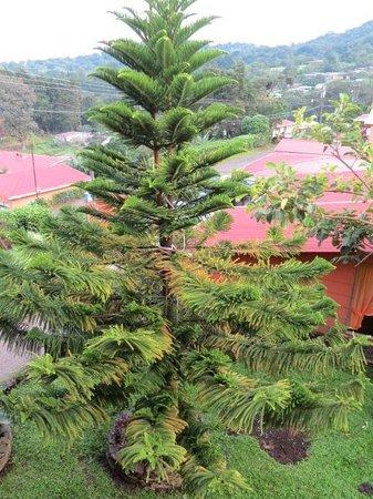 Hotel Cipreses Monteverde Costa Rica: Desde el balcón de nuestra habitación.