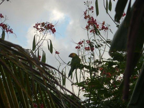 Bamboo Bali Bonaire Resort: Een lora of een prikichi?