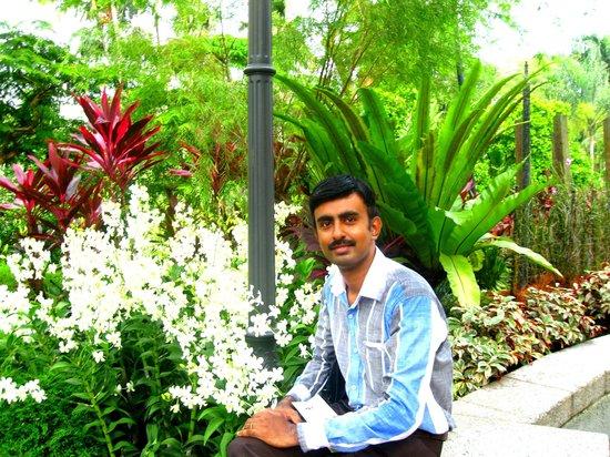 สวนพฤกษชาติสิงคโปร์: garden