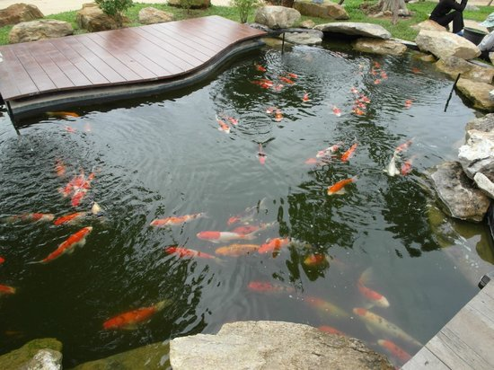 Hua Hin Safari: Fish pond