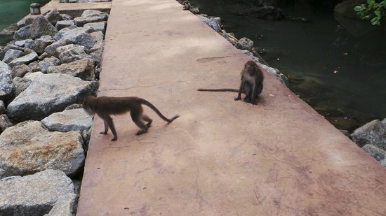 Lake of the Pregnant Maiden: monkeys