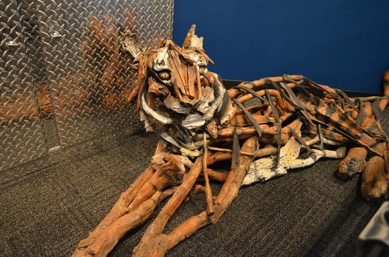 Ripley S Believe It Or Not Driftwood Tiger