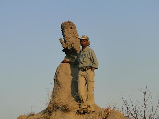 Cheetah Plains: Doc and his termite mound