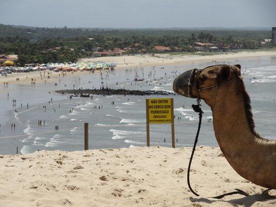 Genipabu Beach: vista da praia desde as dunas