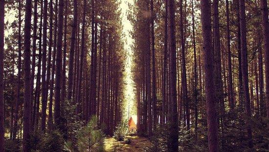 Domaine Summum: Pine Plantation