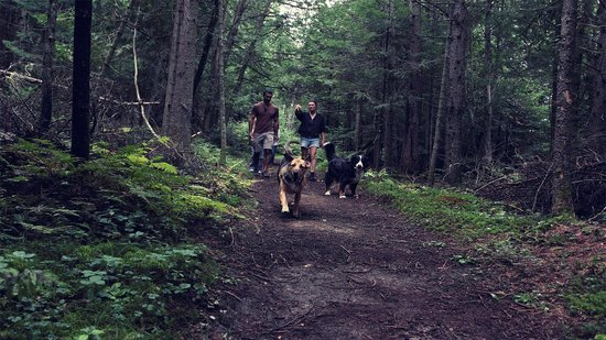 Domaine Summum: Dogs can be of-leash