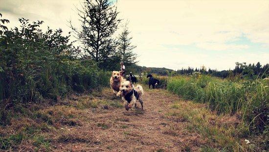 Domaine Summum: Run,Romp & Roll