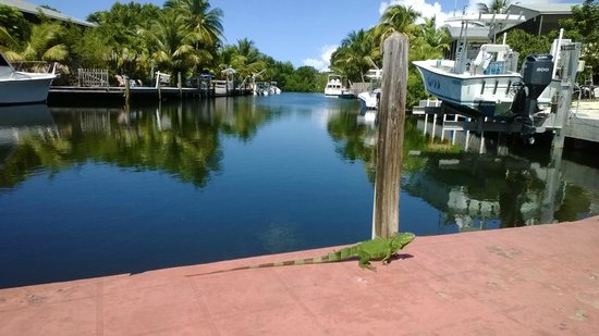 "Conch on Inn Motel: Canal at outdoor ""lobby,"" complete with random green lizard."