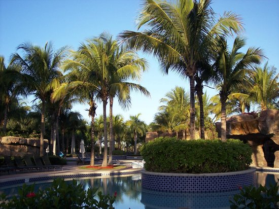 Hyatt Coconut Plantation: more lush surroundings