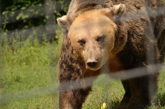 Libearty Bear Sanctuary Zarnesti : liberty bear 2