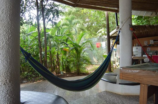Pura Vida Hostel: Hammocks and hostel garden.