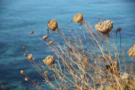 Xanadu Island Hotel: Sea flowers....