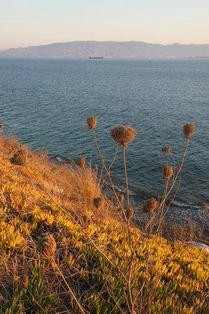 Xanadu Island Hotel: Sea grass.....