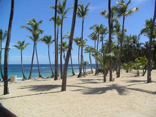 Excellence Punta Cana: Beach