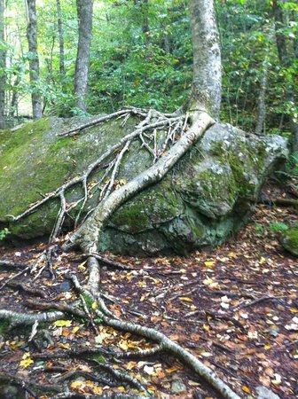 Uisge Ban Falls : Root System
