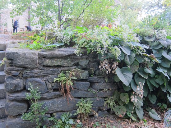 Oldest Ginko Tree In Usa Picture Of Bartram 39 S Garden Philadelphia Tripadvisor