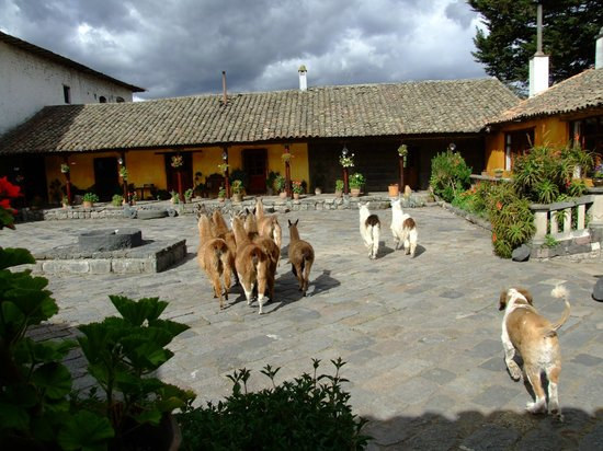 Hacienda San Agustin De Callo : Llama!