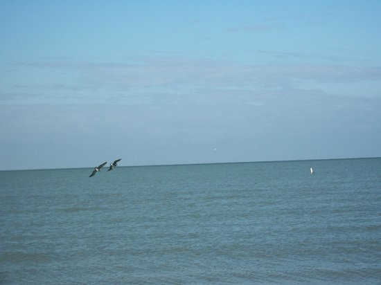 Holiday Water Sports: Pelican's eating breakfast before our run.