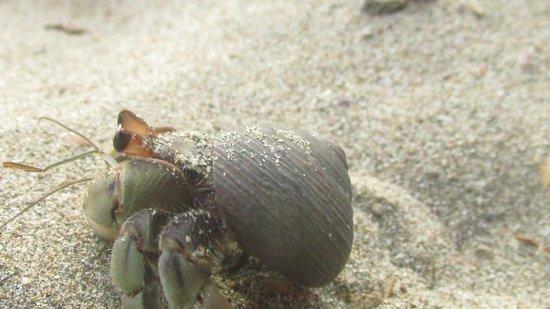 Empalme a Las Playas: Herm