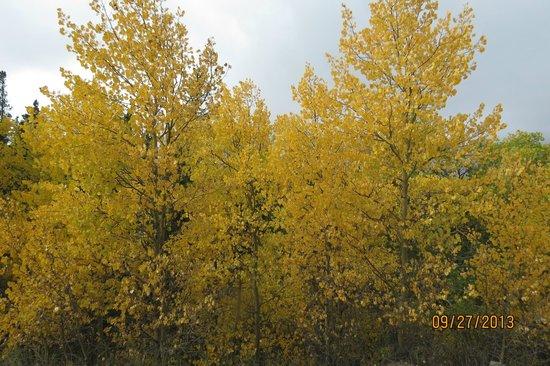 Boreas Pass Road: Fall colors September 27 2013