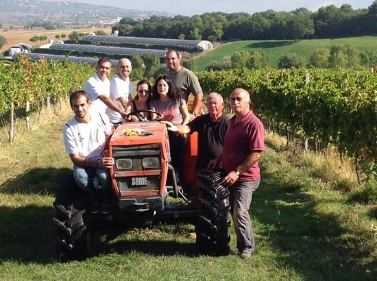 Montioni, Oil Mill & Winery: Montioni's grapes Harvest