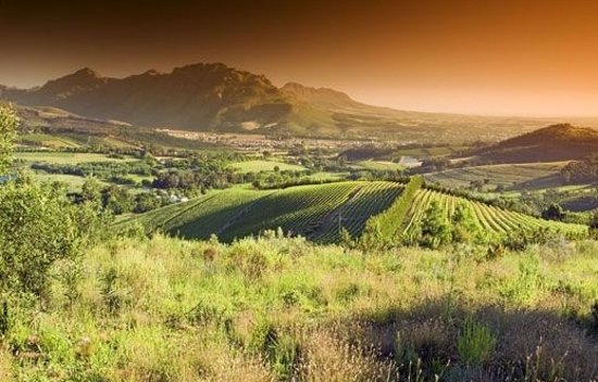 African Wonder Tours: Awesome wine, great scenery and wonderful company!