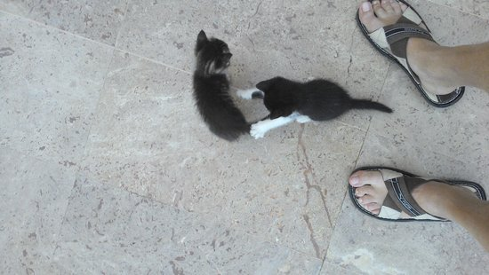 Hotel Riu Kaya Belek: hotel kittens