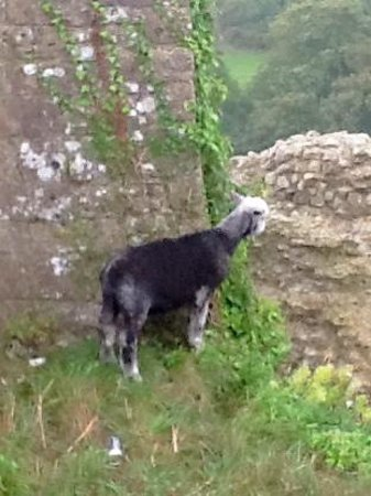 Corfe Castle: The black sheep of the castle