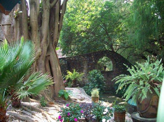 El Rincon del Encanto: Detalle de muro y árbol de hule.