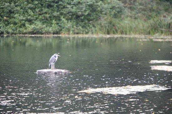 Crowne Plaza Hotel Dublin Airport: Grey Heron