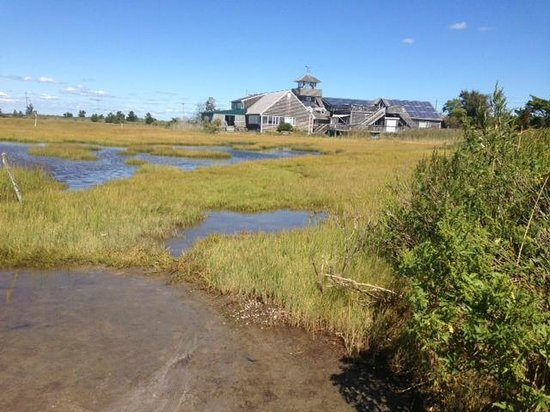 The Wetlands Institute: The wetlands trail - great for birding!