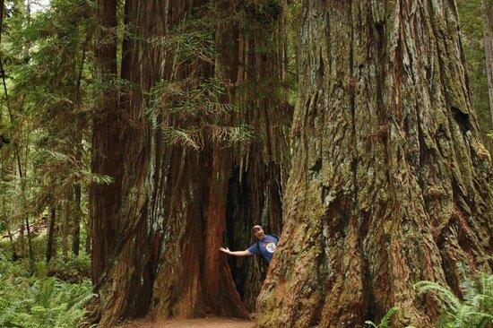 Prairie Creek Redwoods State Park: Redwoods