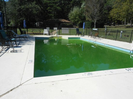 Raccoon Mountain RV Park and Campground: pool area