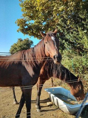 Agriturismo Relais Borghetto il Montino: Tre splendidi cavalli...