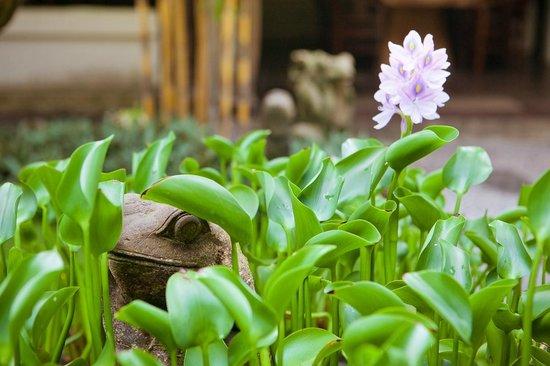Hotel Puri Bambu: Лягушек здесь много!