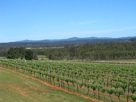 Hunter Valley Wine Tasting Tours : Lovely views of hillside and vines