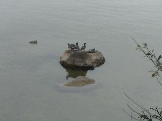 The Briars: cormorants in front of the cottage