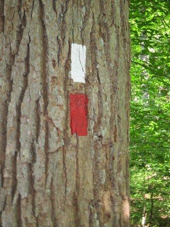 Tyler Arboretum: Trail markers