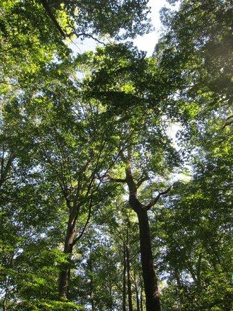 Tyler Arboretum: trees!