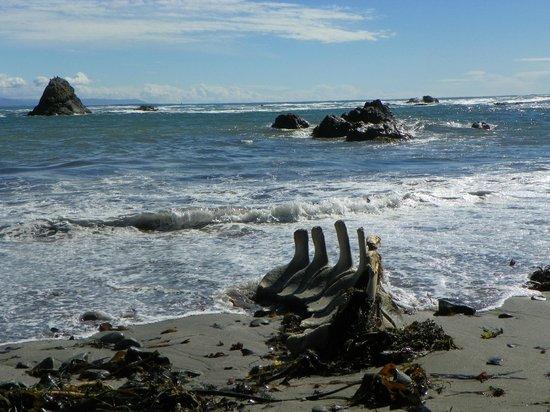 Chetco Point Park: whale spine